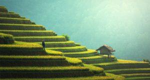 תמונת רקע למה דווקא תמיד ירוק ייבוא והתקנת דשא סינטטי