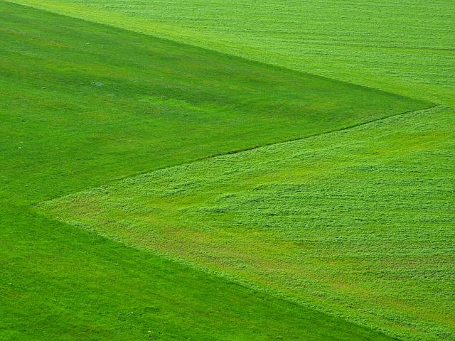 תמונת חייגו מהר למה דווקא תמיד ירוק ייבוא והתקנת דשא סינטטי