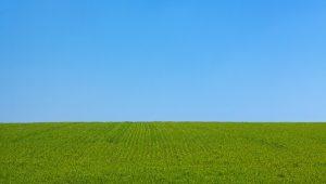 תמונת רקע לדף התקנת דשא סינטטי על קרקע תמיד ירוק