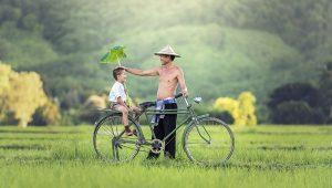 רקע דף אודות החברה תמיד ירוק ייבוא והתקנת דשא סינטטי