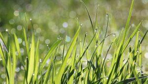 תמונת רקע לדף דשא סינטטי או דשא טבעי התקנה של תמיד ירוק